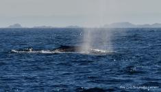 DSC_3631 Balea Azul Chasula 11082018